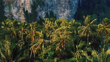 paysage du matin palmiers et attraction touristique de montagne