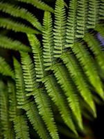 Wild growing ferns in the forest