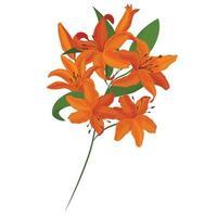 Vector bouquet. Orange lilies. Vector set of flower elements. A colorful image.