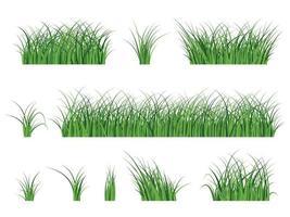 Fragmento de una hermosa hierba verde aislado en una ilustración de vector blanco