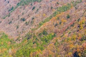 Beautiful landscape with maple trees in autumn