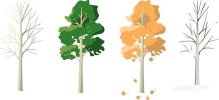 Aspen in four seasons. vector