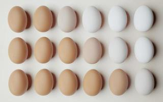 Chicken eggs aligned and ordered from darkest to lightest on a light background, 3d render photo