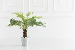 Plant decoration in the living room photo