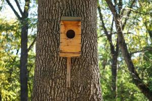 A birdhouse made of plywood on the side of a thick tree trunk in daylight photo