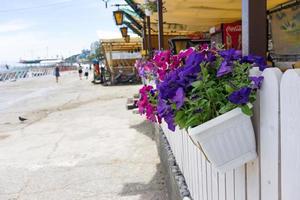 Coloridas plantas en una valla de madera en un paseo marítimo frente al mar foto