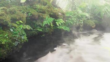 folhas verdes de samambaia e musgo com o rio fluindo