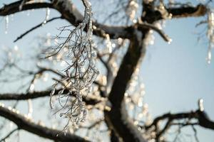 Close-up of icicles on bare tree branches photo