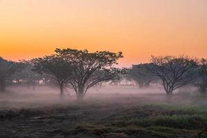 Foggy forest at dawn photo