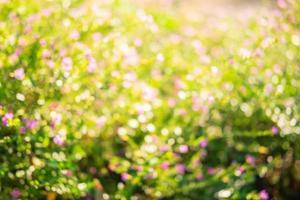 Bright garden background photo