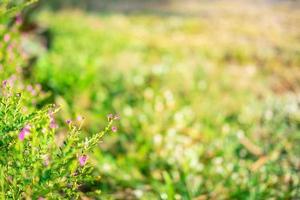 Green field background photo