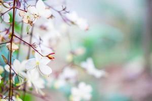 White flowers background photo