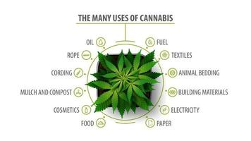 Many uses of cannabis, white poster with infographic and greenbush of cannabis plant, top view vector