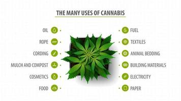 Many uses of cannabis, banner with infographic of uses of cannabis and greenbush of cannabis plant, top view vector