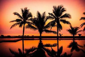 palmeras alrededor de una piscina al aire libre foto