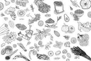 Herbs and Spices. Hand drawn vector illustration set.