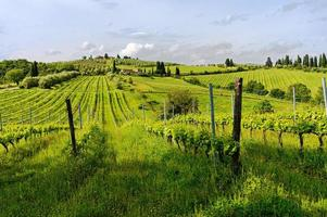 Tuscanian vineyards in a sunny morning photo