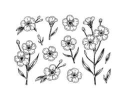 conjunto de flores y ramas dibujadas a mano vector