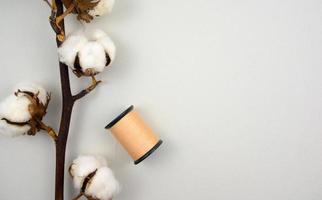 Branch of cotton with a spool of thread photo