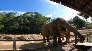 elefantes no zoológico