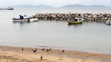 corvos em busca de comida na praia