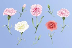 Watercolor carnation flowers set illustration vector