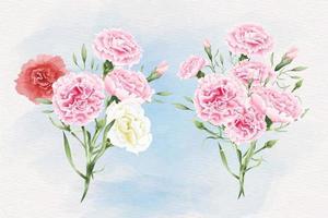 Watercolor carnation flowers illustration vector
