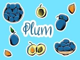 Set of vector illustrations depicting plums.