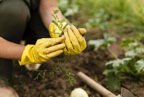 Close-up woman harvesting a garden