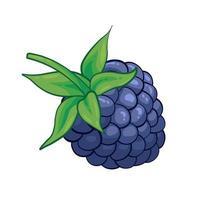 Blackberry sweet fruit illustration for web isolated on white background vector