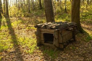 caseta de perro de madera entre árboles a la luz del día foto