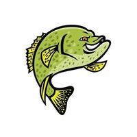 crappie fish color vector