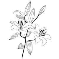 Flower lily isolated over white background. Floral pattern. Floral bloom decor for greeting card design, garden botanical illustration vector