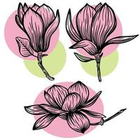 Set of outline magnolia flower and leaf drawing with line art on white backgrounds with pink and green spots. Vector illustration