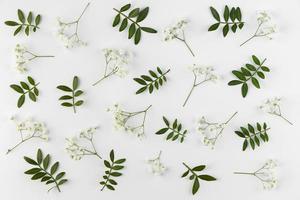 plano laicos flores sobre fondo blanco foto