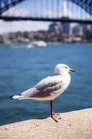 Seagull in the harbour photo