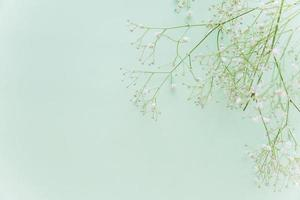 Green flowered branches on mint background photo