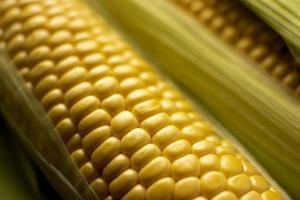 Fresh corn composition close-up photo