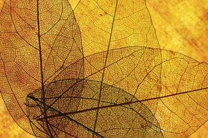 vista frontal hojas transparentes naranjas foto