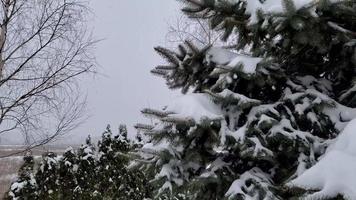 nieve esponjosa en las ramas de los árboles video
