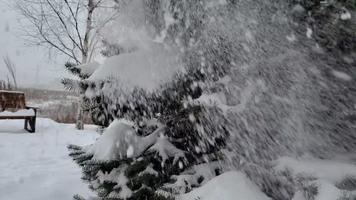 hermosa nieve esponjosa en las ramas de los árboles