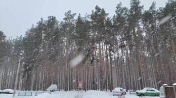 Tiro de cámara lenta de nieve cayendo sobre fondo de Navidad de bosque video