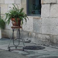 hermosas plantas en la calle foto