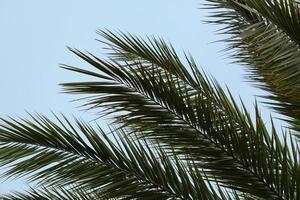 palmera y cielo azul foto
