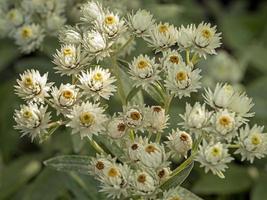 pequeñas flores blancas foto
