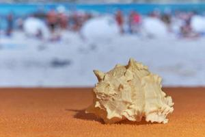 A shell with blurred sea on the background. photo