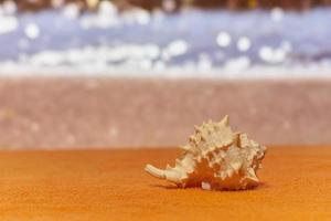 A shell in sunshine with blurred sea on the background. photo