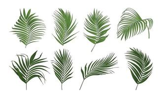 Collection of palm tree leaves vector