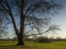 Bare winter tree in a park photo