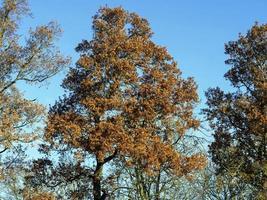 Autumn foliage and a clear blue sky photo